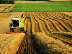 Экспорт сельскохозяйственной продукции / Export of agricultural products