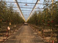 Installation of greenhouses