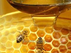Закуповуємо мед натуральний бджолиний
