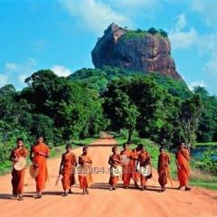 Горящие туры в Шри-Ланку из Одессы и Киева: все включено, отдых в Шри-Ланке