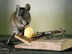 Extermination of mice Nikolaev and Nikolaev