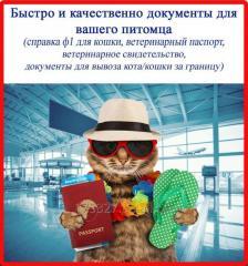 Срочное сопроводительные документы для кошки
