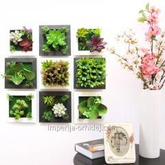 Заказ домашних цветов и растений