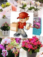 Delivery of flowers and gifts