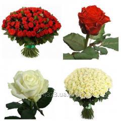 101 красная и белая роза с доставкой по Запорожью
