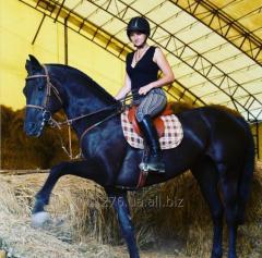 Спортивная тренировка на лошади для людей с сидячим образом жизни