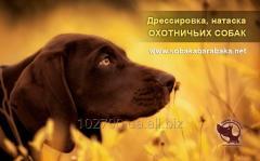 Натаска собак.Киев.