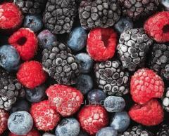 Blast Freezer foods vegetables, fruits, berries,