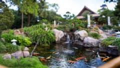 Консультации, садовый пруд с рыбками, содержание карп кои, кормление карп кои, ланшафт пруд