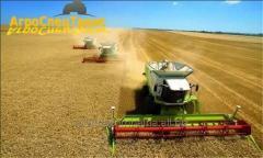 Услуги уборки урожая 2021