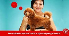 Помощь в продаже щенков!