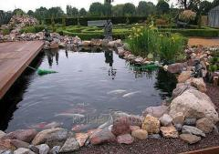 Водоем с рыбками,цветные карпы кои,водные растения,ланшафт,консультации,выезд