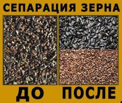 Сортировка зерна, разделение зерновых культур, сепарация зерна