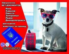 Оформление вет документов для вывоз собаки из