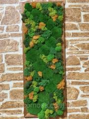 Услуги по озеленению в коммерческих помещениях