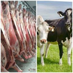 Закупівля ВРХ (корів та молодняк)