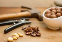 Раскол плодов грецкого ореха и фундука