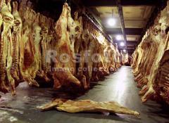 Проектирование и комплектация Мясокомбинатов и
