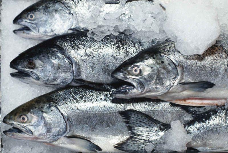 transportirovka_morozhenoj_rybprodukczii