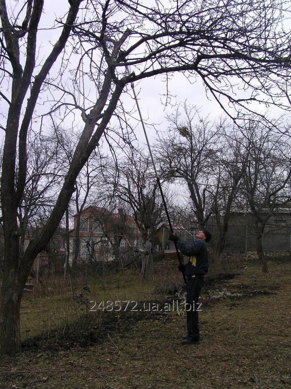 obrezka_derevev_vosstanovlenie_staryh_sadov