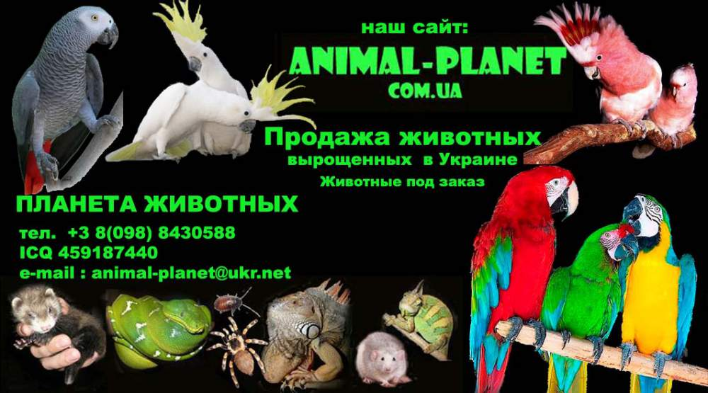 zakaz_i_dostavka_ekzoticheskih_zhivotnyh_po_ukraine_i_blizhnee_zarubezhe