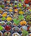 Услуга по подбору растений