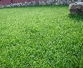 Озеленение, усадьба газонов