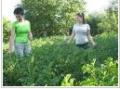 Подборка удобрений для почвы, увеличение урожая, Днепропетровск
