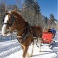 Зимние конные прогулки в Харькове, отдых на лошадях как зимой так и летом в Харькове
