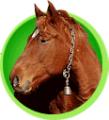 Перевозка живых животных, домашнего скота