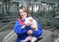 Забой свиней украина херсон
