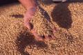Переработка зерна  услуги по переработке зернофуража