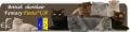 Питомник занимается разведением чистокровных британских короткошерстных кошек
