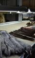 Обработка пушно-мехового сырья