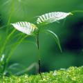 Консультации по вопросам очистки выбросов