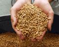 Inspection of grain