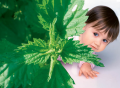 Консультации аллерголога