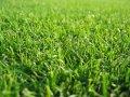 Создание газонов, Уход за газонами Львов