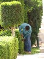 Квалифицированные садовники.+79787839651