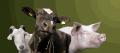 Услуги перевозки скота по Украине и за рубеж спецавтотранспортом