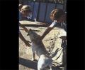 Общий курс дрессировки собак