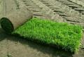 Устройство рулонных газонов