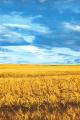 Громадська організація «Інститут Сільського Розвитку» (ІСР) заснована в березні 2003 року. ІСР є незалежною аналітичною структурою, яка об'єднує економістів, юристів, фахівців із соціальних питань, розвитку підприємництва та державного управління