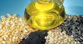 Выращивание зерновых,масленичных,бобовых куьтур