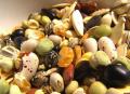 Выращивание и реализация зерновых,масленичных,бобовых куьтур, кроме риса