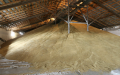 Хранение овощей , Лубенский семеобрабатывающий завод