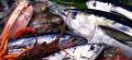 Доставка элитных сортов свежей рыбы и морепродуктов в рестораны Киев, Киевская область