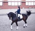 Показательные выступления, выездка, конкур, обучение лошадей, дрессура лошадей, международный туризм и активный отдых