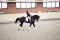 Показательные выступления, выездка, конкур, обучение лошадей, дрессура лошадей, клуб активного отдыха, услуги конно спортивные