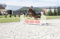 Показательные выступления, выездка, конкур, обучение лошадей, дрессура лошадей, культурно-зрелищные мероприятия, фестиваль конного спорта, фестиваль на лошадях